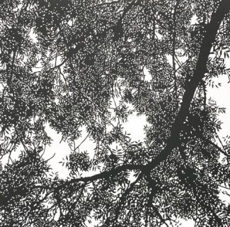 Ash Tree Filigree 2, Linocut, 39x39cm