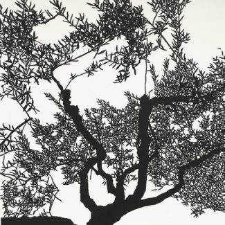 Olive Tree Umbria, Linocut, 39x39cm