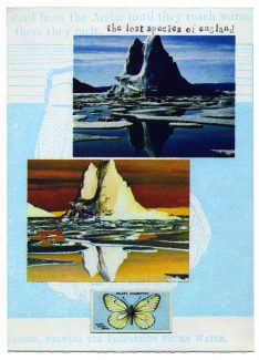 Black Veined White - Ian Brown RE